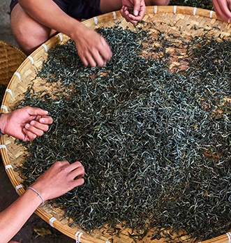 Production thé pu erh