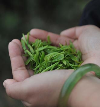 Pesticide dans le thé