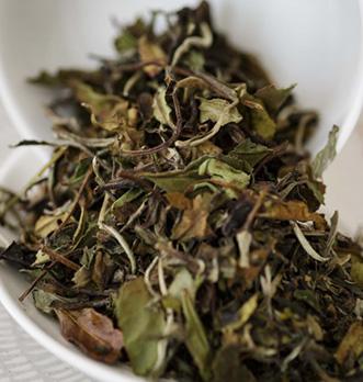 tout savoir sur le thé blanc