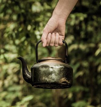 thé noir ou thé vert
