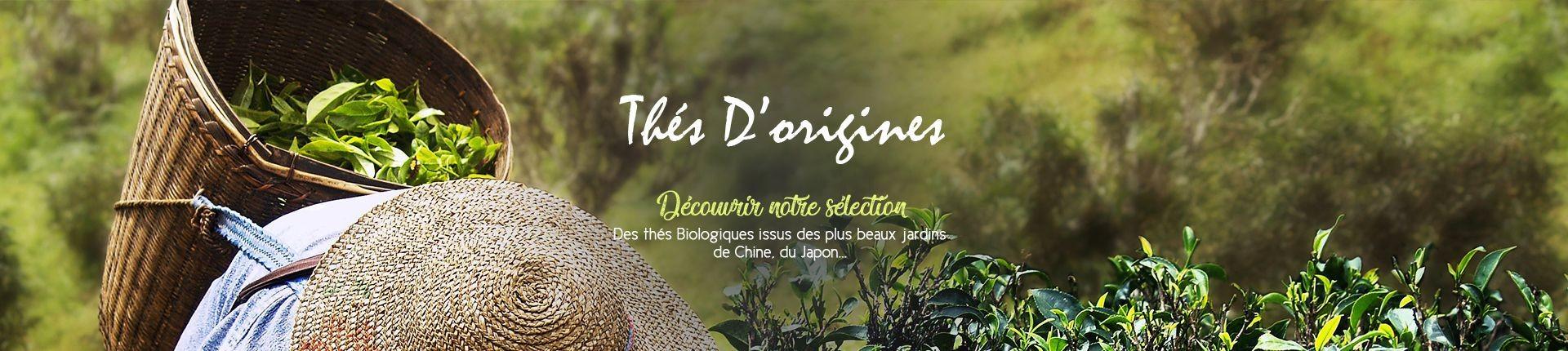thé d'origines : Issus des plus beaux jardins